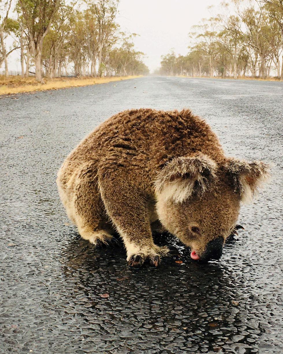 גשם ו הצפות ב מזרח אוסטרליה ניו סאות' וויילס  ו קווינסלנד  (צילום: רויטרס)