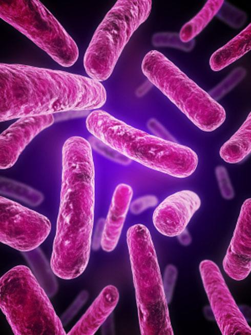 הפרוביוטיקה שומרת על איזון החיידקים הטובים באופן רציף ובכך למעשה מסייעת לנטרל את הנזק שגורמת האנטיביוטיקה ואת תופעות הלוואי הנלוות לה  (צילום: iStock)