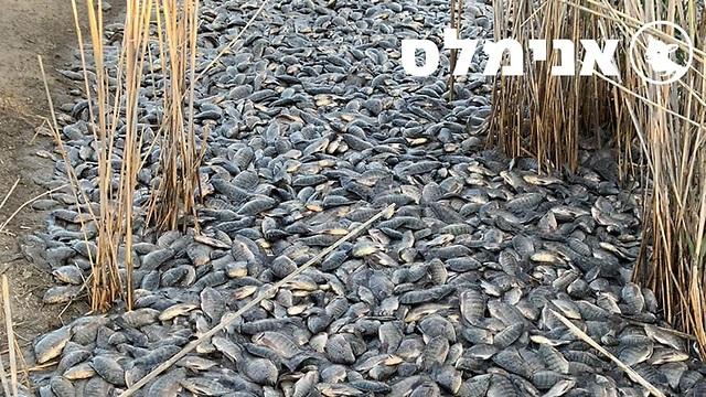 הדגים המתים (צילום: אנימלס)