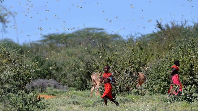 נחיל ארבה קניה מזרח אפריקה (צילום: AFP)