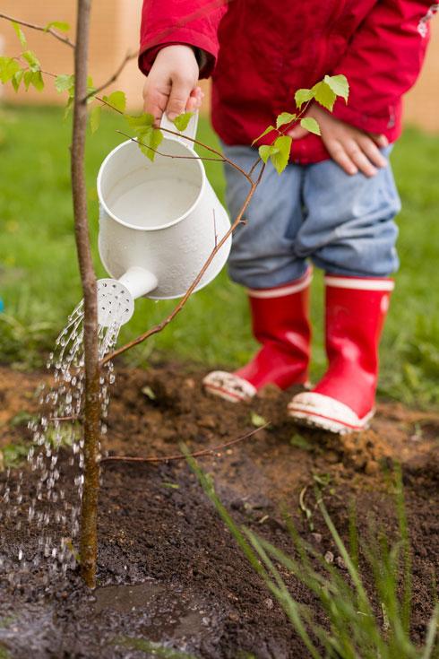 הקפדה על ההשקיה הראשונית היא הסוד של הגננים הטובים  (צילום: Shutterstock)