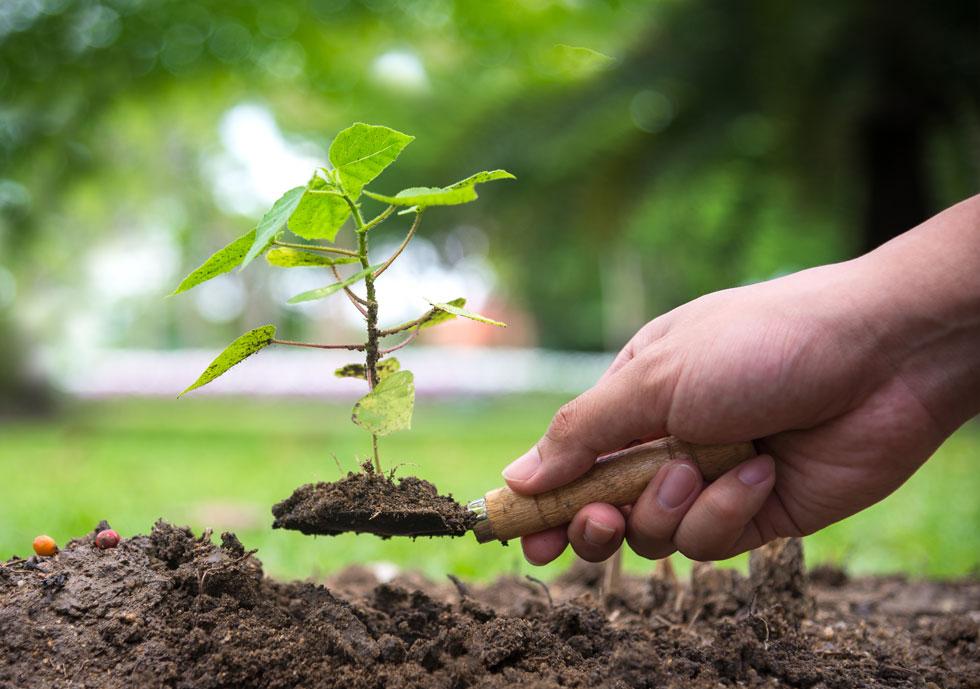 """ט""""ו בשבט הוא הזמן האידיאלי לנטיעת עצים נשירים. עצים המוגדרים ירוקי-עד כדאי לנטוע באביב (צילום: Shutterstock)"""