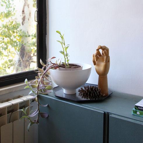 אותו צמח ליד חלון ירושלמי, בביתה של המעצבת אלישבע מנקין, מקבל מראה שונה לגמרי: עם הרבה פחות שמש הסגול מתערבב ונוטה לירוק זית, העלים הופכים קטנים ומרווחים (צילום: אלישבע מנקין)