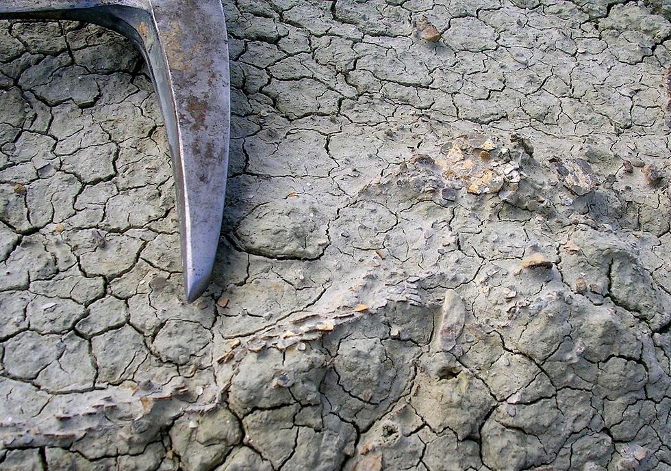 מאובני ביצי דינוזאורים (צילום: באדיבות דרלה זלינסקי)