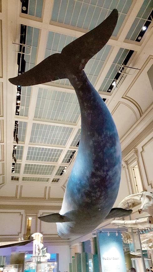 מוזיאון הטבע  (צילום: צביקה בורג)