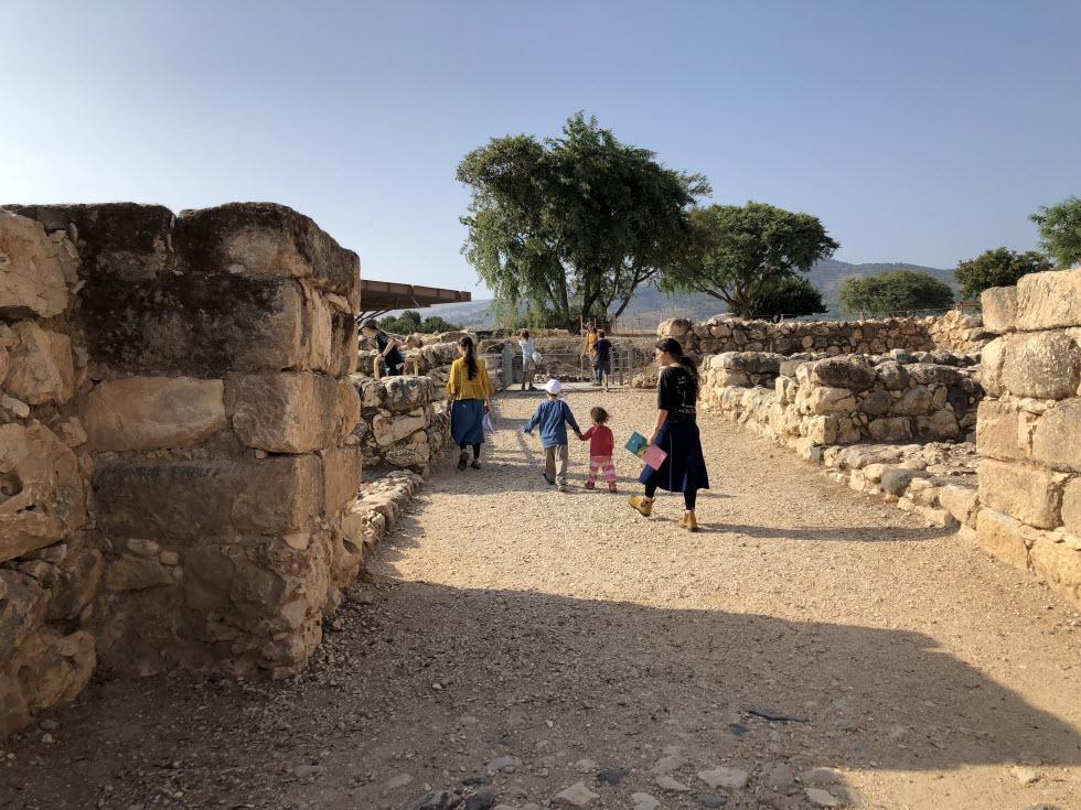 המרדף אחר החרפושית המצרית (צילום: חגי דביר)