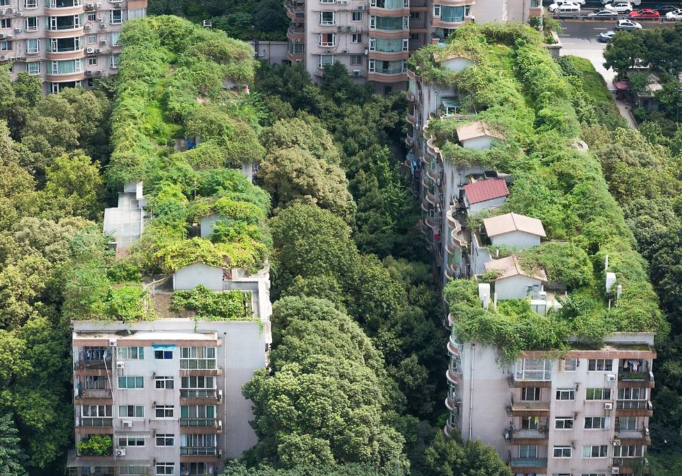 גג ירוק (צילום: shuttersotck)