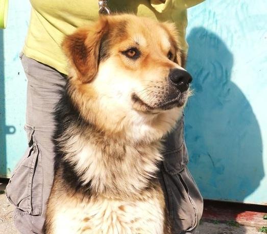 """כלב הנמצא בצער בעלי חיים בת""""א (צילום: דורון אורסיאנו-ויטנר)"""
