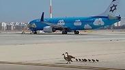 צילום: מבצעים רשות שדות התעופה
