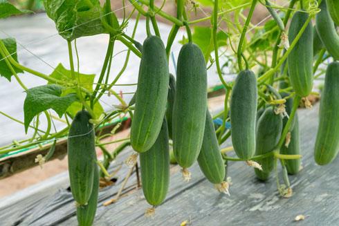 שולפים את הזרעים מהירק אותו תרצו לגדל ומניחים על מגש או צלחת על גבי מצע סופג (צילום: Shutterstock)