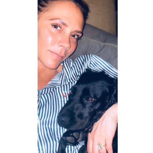 האשם האמיתי? ויקטוריה עם פיג הכלב (צילום: אינסטגרם)