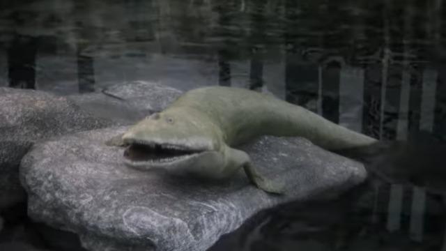 הדג הקדום (צילום: מתוך המחקר)