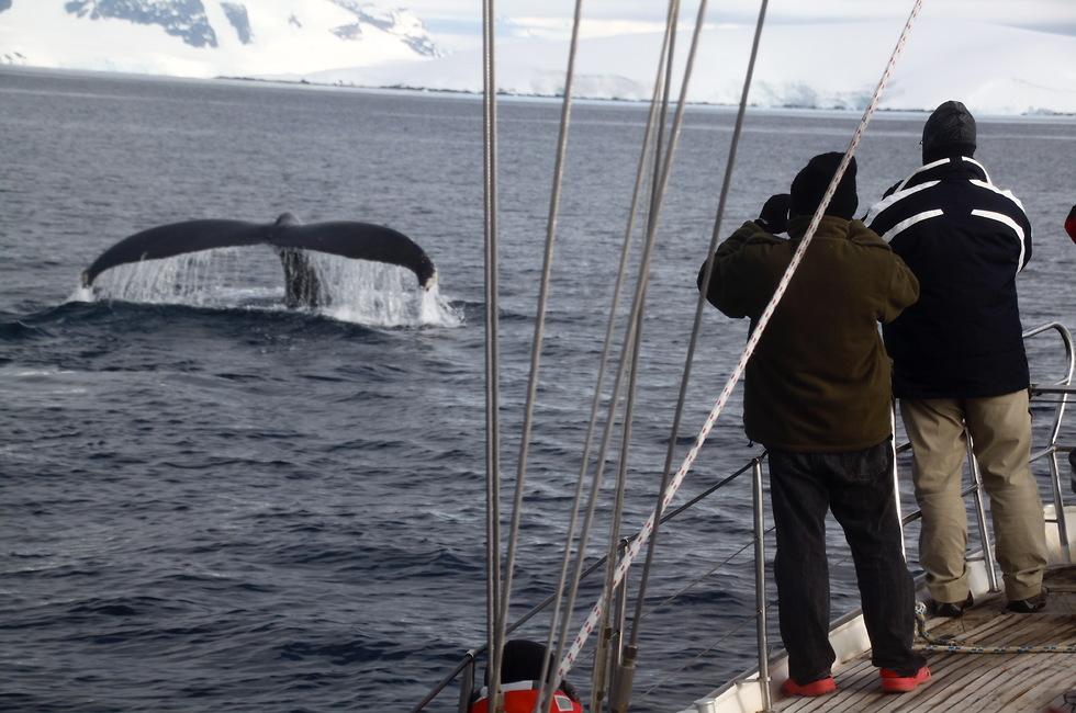 אסף רייספלד אנטארקטיקה הקוטב הצפוני לשימוש בלייזר בלבד (צילומים: אסף רייספלד)