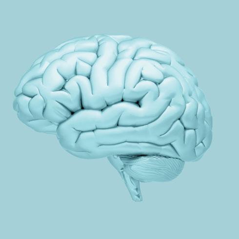 הגבלה קלורית בקרב נבדקים בני 60 ומעלה עם עודף משקל ובעלי לקות קוגניטיבית קלה במשך שנה, הובילה לשיפור בזיכרון המילולי, בביצוע משימות ובתפקוד הכללי שלהם (צילום: Shutterstock)