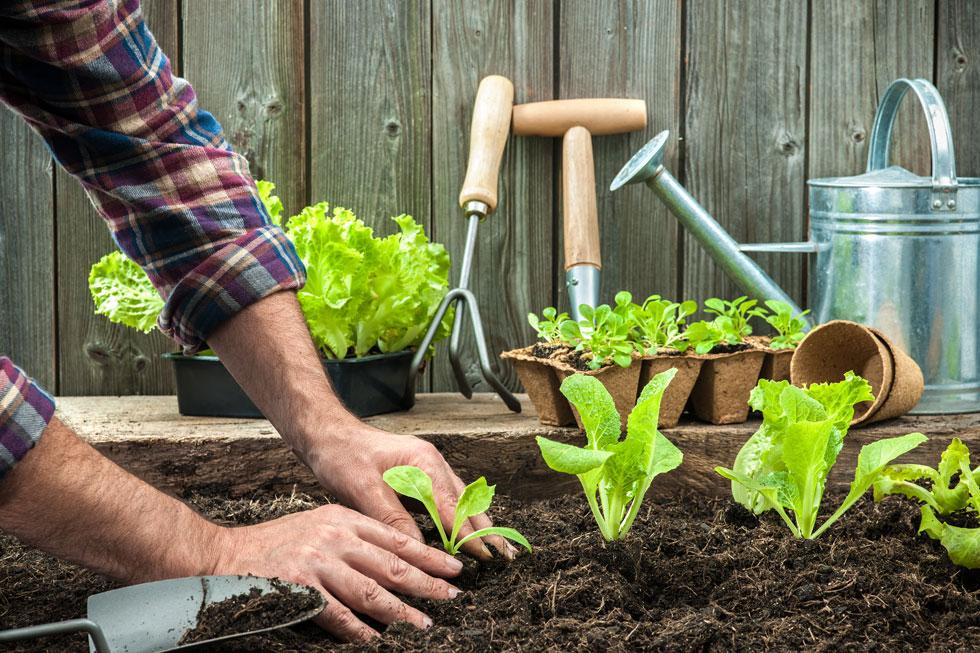 באביב ננסה למקם את שתילי הירקות שלנו במקום החשוף לכמה שיותר שעות שמש ישירה  (צילום: Shutterstock)
