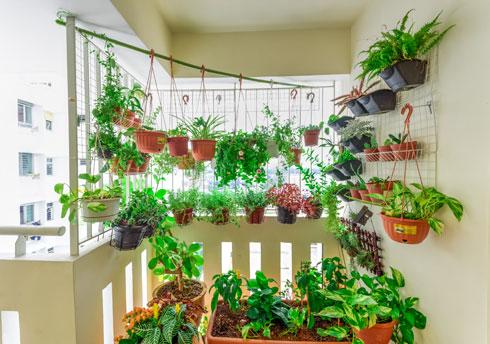 בקיץ אפשר להזיז את הצמחים שלנו למקום מוגן כמו ליד קיר או צמח גדול שיגנו עליהם מעט מהשמש היוקדת (צילום: Shutterstock)