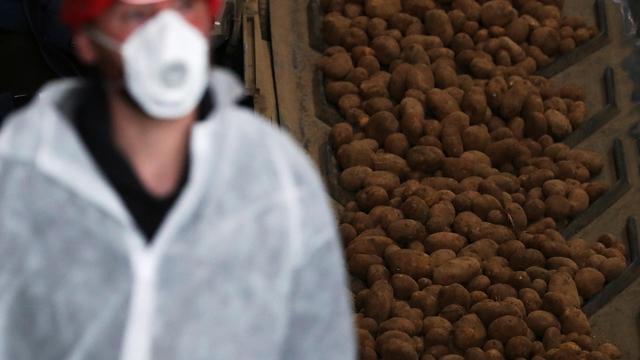 בלגיה מפעל לייצור צ'יפס תפוחי אדמה (צילום: רויטרס)