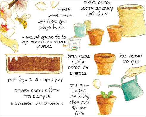 מדריך לגינון בעציצים (איור: אילנה שטיין, לוח שנה בגינה)