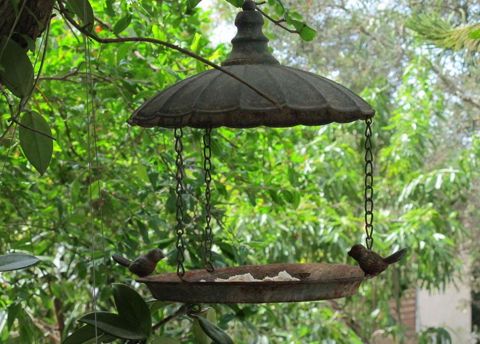 ציפורים כמו ירגזי ופשוש מנשנשים מזיקים שונים ואפשר באמצעים פשוטים לייצר בתים שימשכו אותם לקנן ולסעוד ואפילו להתרחץ במרפסת שלכם (צילום: באדיבות רודה גינון ונוף)