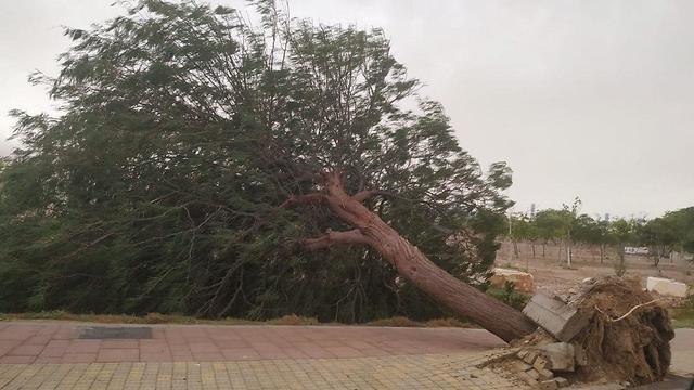 מזג אויר קיצוני ברחבי הארץ (צילום: נעמה בן עמי פישר, החברה להגנת הטבע)