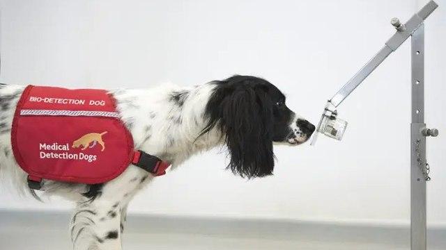 כלב שמשתתף בניסוי (צילום: U.K. Department of Health and Social Care)