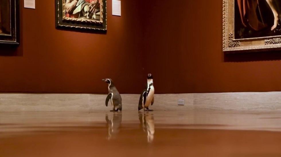 פינגווינים במוזיאון (צילום: The Nelson-Atkins Museum of Art)