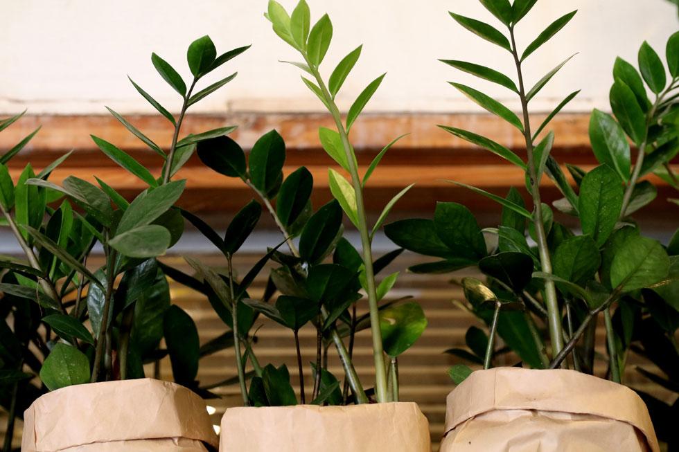 זמיה קוקוס. לבתים שמגדלים בהם ילדים לצד צמחים (צילום: מורג רובננקו דיין)