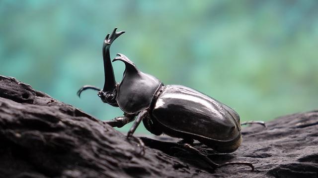 חיפושית (צילום: shutterstock)