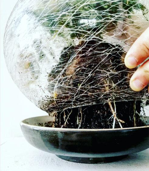 אהיל סדוק יהפוך לטרריום שומר לחות לשרכים (צילום: רינת טל)