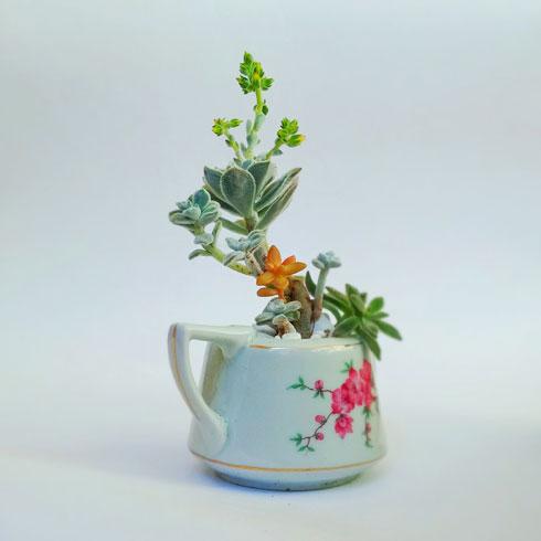 הכי בני קיימא: צמחים ווינטג' (צילום: רינת טל)