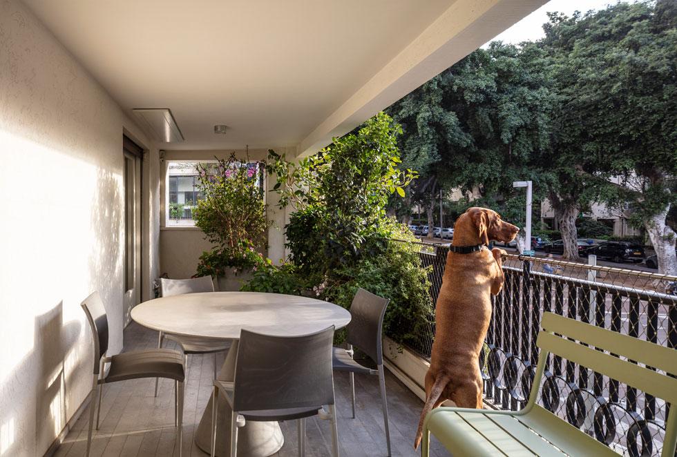 ''בבוקר השתמשנו במרפסת הדרום-מזרחית, ואחרי הצהריים במערבית. אנחנו זזים עם השמש'' (צילום: עמית גרון)