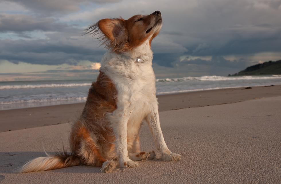 בריזה בחוף הים (צילום: shuttersotck)