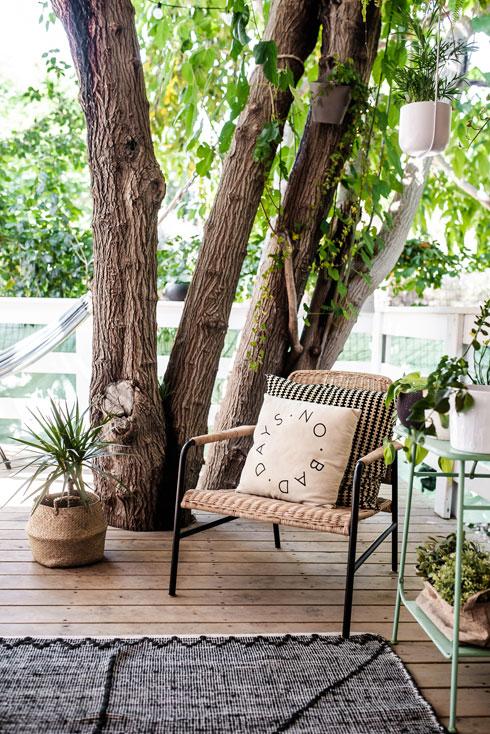 הדק נבנה סביב העץ הוותיק (צילום: קרין רבנה)