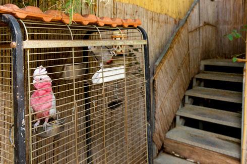 """""""לפני שעברנו לדירה בגבעתיים, גרנו במושב בן שמן ובסביון, אז היה לנו מרחב גדול לגידול חיות כמו חמורים, כבשים, קופים"""" (צילום: ענבל מרמרי)"""