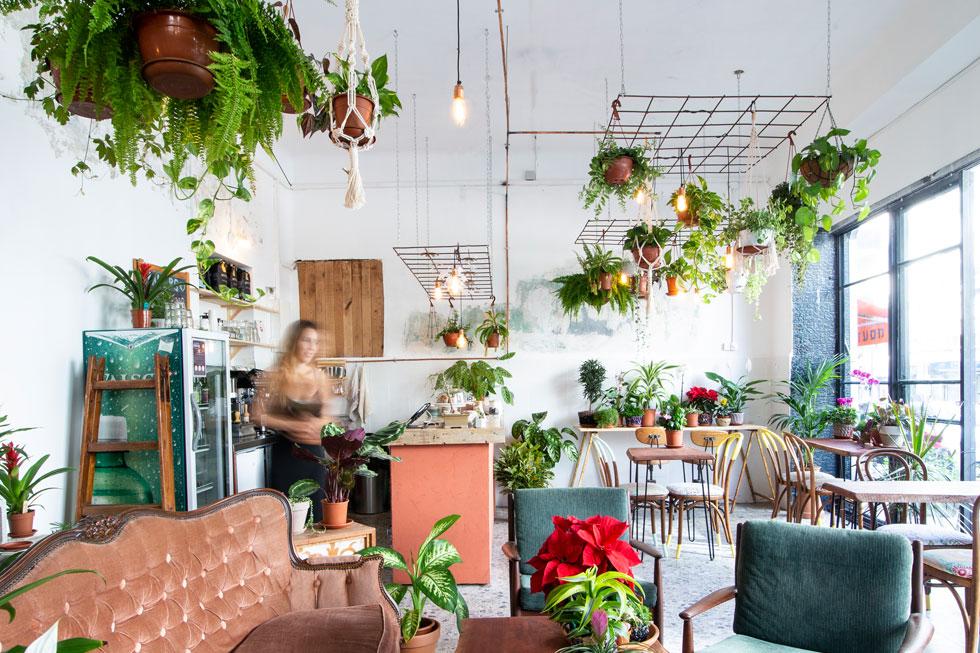וכאן ב''מייקרס'' (tlvmakers@), בית קפה תל-אביבי שהוא גם חנות צמחים (צילום: הדר דולן)