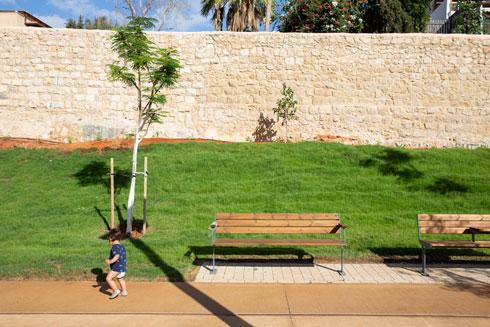 כי לעצים יקח עוד זמן (צילום: דור נבו)