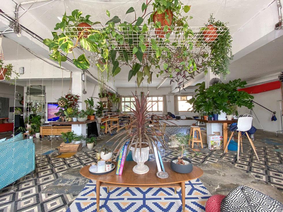 אפשר לתלות צמחים מכל דבר, אפילו מרשת ברזל פשוטה. כאן בדירתו של הצלם רן יחזקאל (צילום: רן יחזקאל)
