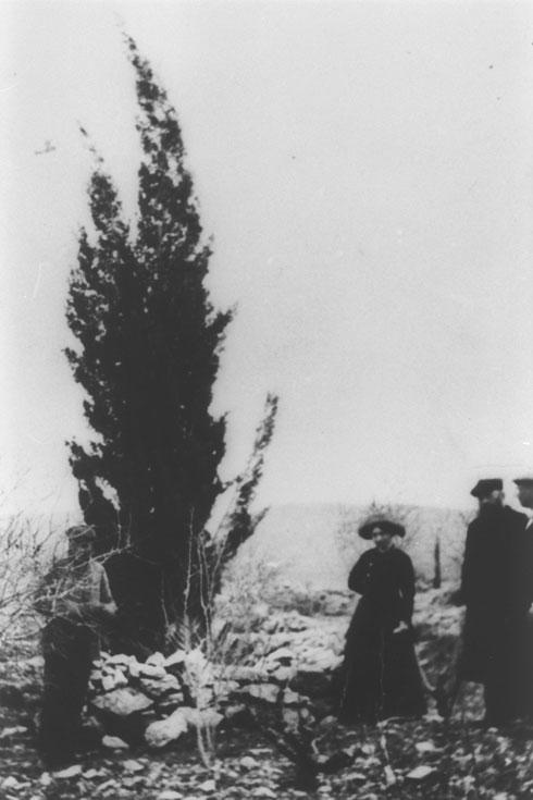 """מקום הנטיעה של הברוש-ארז של הרצל, 1898 (צילום: לע""""מ)"""