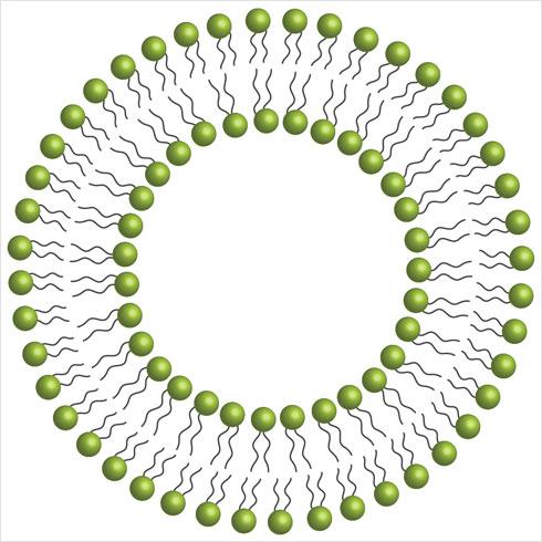 שכבת ההגנה של הוויטמין הליפוזומלי מונעת ממנו להתפרק בדרכו לקיבה ולאבד מיעילותו
