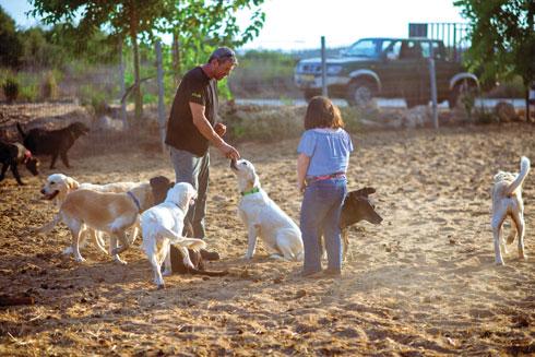 """גדי בחווה. """"הכלב כעוד מבוגר אחראי"""" (צילום: קורין פאל)"""