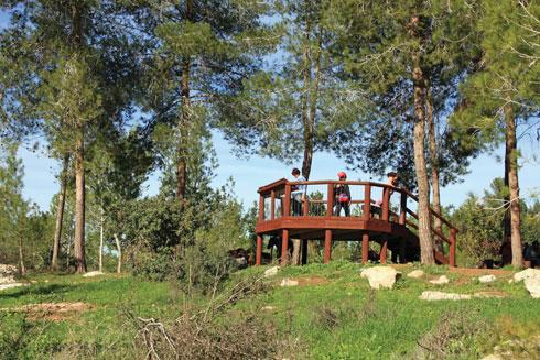 אטרקציות ופיקניק. יער בן שמן  (צילום: יעקב שקולניק)