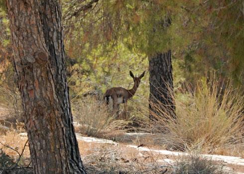 חיים במדבר. יער יתיר  (צילום: צביקה בורג)