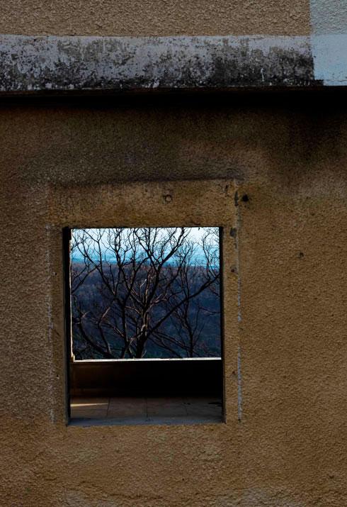 העצים עדיין שרופים בתמונות האלה (צילום: Adva Baram)