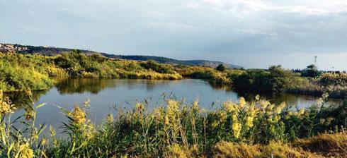 """בשפך נחל דליה יש אזור שנקרא """"הדיפלה"""", שבעונה זו גדוש בציפורים נודדות וחורפות  (צילום: שימי בנימין, שחף ריטר, עינב קוצר – החברה להגנת הטבע)"""