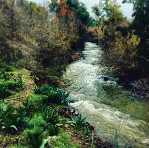 הירדן ההררי. בחלקו הדרומי, מעט לפני הכנרת, הנהר לובש צורה טבעית ופראית (צילום: שימי בנימין, שחף ריטר, עינב קוצר – החברה להגנת הטבע)