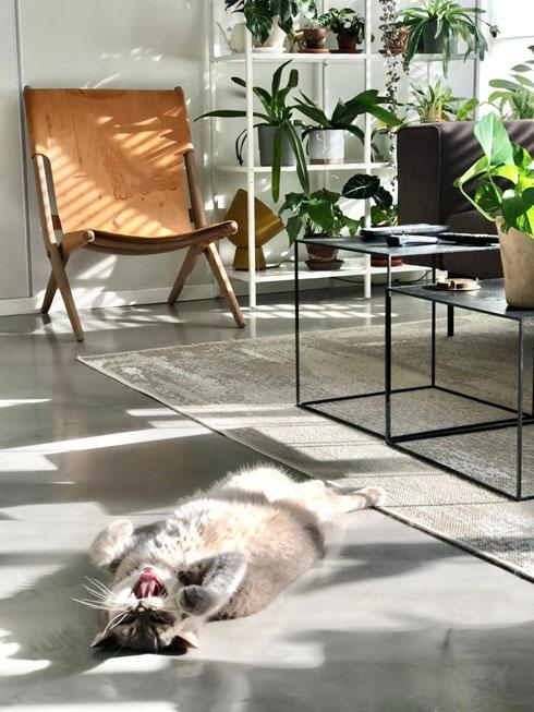 בדירתם של מור חלימי ואריק ליטוין (צילום: מור חלימי)