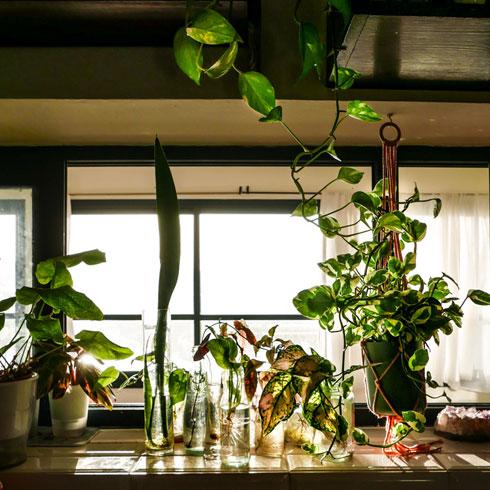 השרשות וטרריום על אדן החלון (צילום: רינת טל)