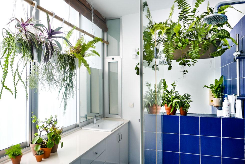חדרי רחצה הם הטרריום האולטימטיבי: לחות יש בשפע, ואם יש גם די אור וחלונות שמקפידים לפתוח כדי להזרים אוויר צח - תגיעו לתוצאה דומה לזו שבדירתם של אביטל ואיל (צילום: רינת טל)
