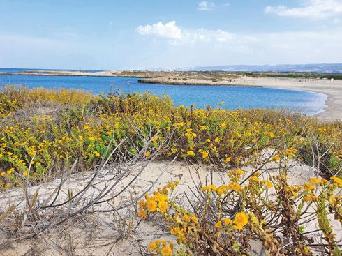 פריחה נאה. חוף הבונים  (צילום: יעל גרטי)