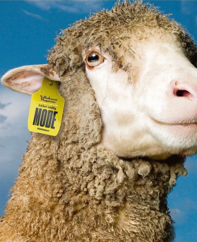 המגזין ההולנדי volkskrant הוקדש בספטמבר לתעשיית הצמר. הלוגו ושאר רכיבי המידע שמופיעים בשער הודפסו (לכאורה) על התג המוצמד לאוזן הכבשה המצולמת